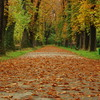 raluca-otopeanu_-falling-leaves-hide-the-path-so-quietly
